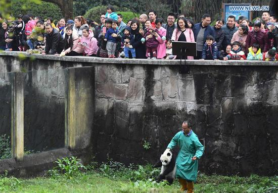 A zoo keeper carries Yu Bao to the public at Chongqing Zoo in Chongqing, southwest China, March 18, 2017. The names were revealed at a naming celebration for three panda cubs Yu Bao, Yu Bei and Liang Yue on Saturday. (Xinhua/Chen Cheng)