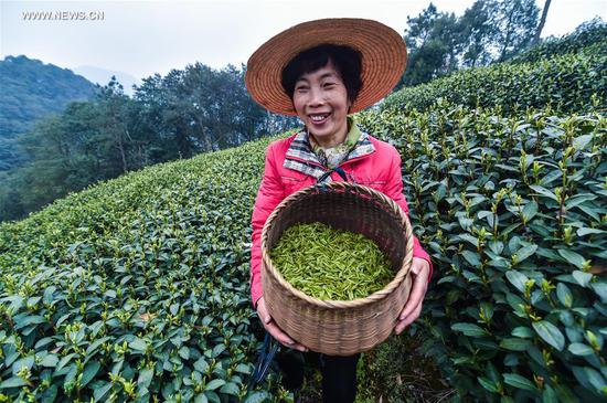 "Farmer Zhu Aigen displays fresh West Lake Longjing tea leaves in a tea plantation in Meijiawu Village of Hangzhou, capital of east China's Zhejiang Province, March 18, 2017. West Lake Longjing Tea planters in Hangzhou are busy with their harvest work ahead of the Qingming Festival to produce the Mingqian (literally ""pre-Qingming"") tea, which are made of the very first tea sprouts in spring and considered to be of high quality. (Xinhua/Xu Yu)"