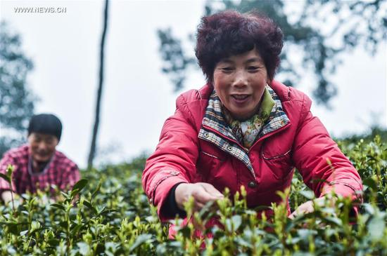 "Farmers pick fresh West Lake Longjing tea leaves in a tea plantation in Meijiawu Village of Hangzhou, capital of east China's Zhejiang Province, March 18, 2017. West Lake Longjing Tea planters in Hangzhou are busy with their harvest work ahead of the Qingming Festival to produce the Mingqian (literally ""pre-Qingming"") tea, which are made of the very first tea sprouts in spring and considered to be of high quality. (Xinhua/Xu Yu)"