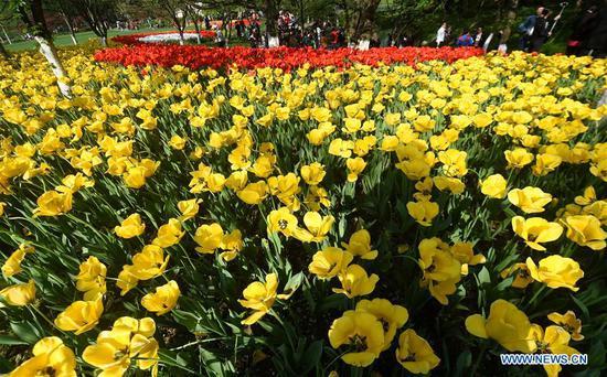 Flowers bloom at Taiziwan Park near the West Lake in Hangzhou, capital of east China's Zhejiang Province, April 12, 2017. (Xinhua/Wang Dingchang)