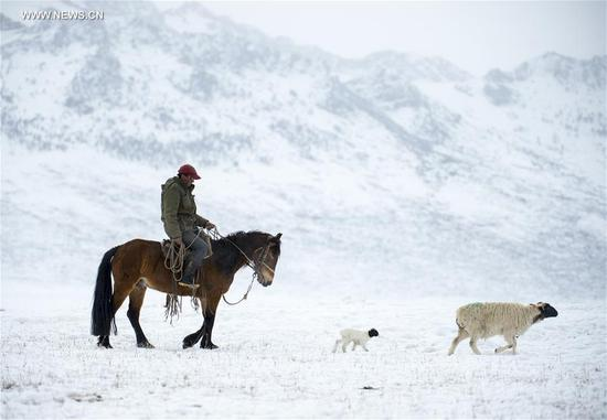 A herdsman follows a new-born lamb on Bayan Bulag grassland in Hejing County, northwest China's Xinjiang Uygur Autonomous Region, April 6, 2017. In April, Bayan Bulag grassland enters into its busiest season for sheep breeding. (Xinhua/Jiang Wenyao)