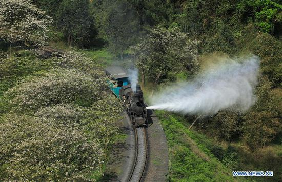 A narrow gauge train runs in Qianwei County of southwest China's Sichuan Province, April 17, 2017. With a history of about 50 years and features of manual control, the Jiayang narrow gauge train in Qianwei County was enlisted as an industrial heritage by local government since April, 2006. (Xinhua/Jiang Hongjing)
