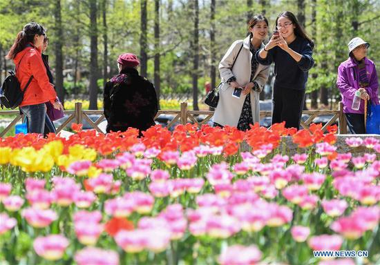Tourists view tulips during a flower tour event in Qingdao, east China's Shandong Province, April 18, 2017. (Xinhua/Li He)