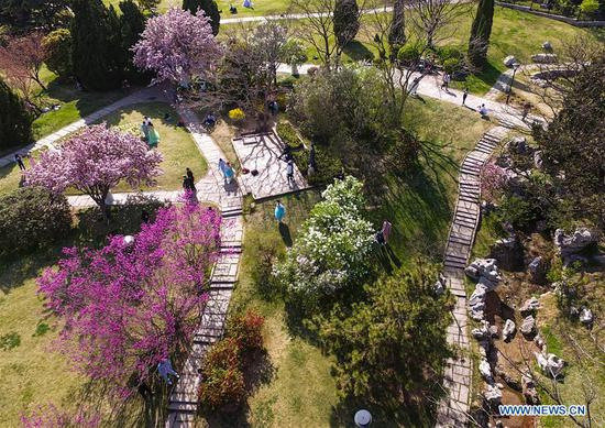 Aerial photo taken on April 18, 2017 shows the scenery of blooming trees during a flower tour event in Qingdao, east China's Shandong Province. (Xinhua/Li He)