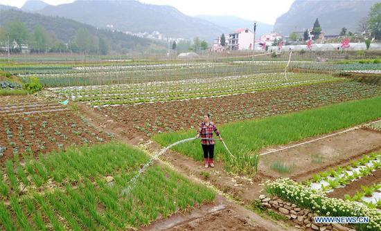 A farmer works at a vegetable base in Dahe Township in Liupanshui City, southwest China's Guizhou Province, April 20, 2017. Farmers were busy with planting these days, as April 20 is Guyu (Grain Rain), one of the 24 solar terms created by ancient Chinese to carry out agricultural activities according to position of sun at the zodiacal circle. (Xinhua/Tao Liang)