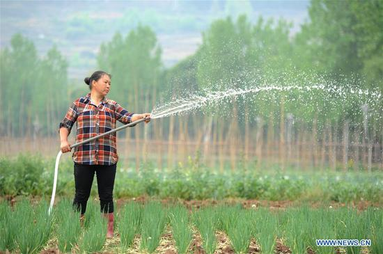 A farmer works at a vegetable base at Dahe Township in Liupanshui City, southwest China's Guizhou Province, April 20, 2017. Farmers were busy with planting these days, as April 20 is Guyu (Grain Rain), one of the 24 solar terms created by ancient Chinese to carry out agricultural activities according to position of sun at the zodiacal circle. (Xinhua/Tao Liang)