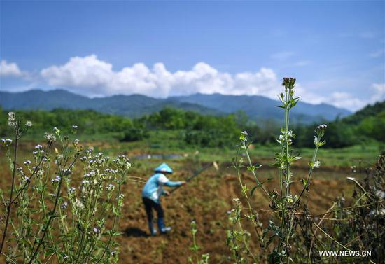 A villager works in farmlands in Fanyang Township of Wuzhishan City, south China's Hainan Province, May 7, 2017. (Xinhua/Shen Hong)