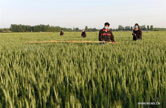 Villagers spray pesticide in farmlands in Linxi County, north China's Hebei Province, May 7, 2017. (Xinhua/Yang Shiyao)