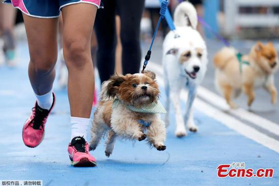 People run with their pets during a mini-marathon for dogs in Bangkok, Thailand May 7, 2017. (Photo/Agencies)