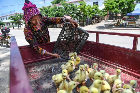 Villager Deng Yaniang receives goslings at Fanyang Township of Wuzhishan City, south China's Hainan Province, May 9, 2017. As part of poverty alleviation project, local agriculture bureau of Wuzhishan City distributed 6161 goslings to members of 84 families in several villages of Fanyan Township on Tuesday. (Xinhua/Shen Hong)