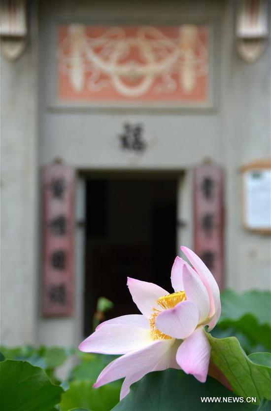Photo taken on June 10, 2017 shows lotus at the scenic spot of Diaolou in Zili Village, Kaiping City of south China's Guangdong Province. The Diaolou (watchtower house) of Kaiping was inscribed on World Heritage List in 2007. (Xinhua/Xu Jianmei)