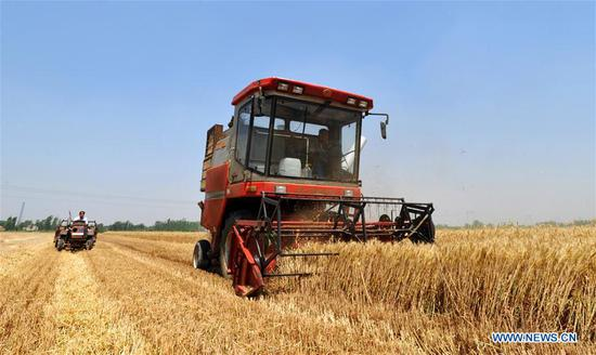 A harvester collects wheat in Nanpi County, north China's Hebei Province, June 11, 2017. More than 70 percent of summer wheat have been harvested across the country. (Xinhua/Mu Yu)