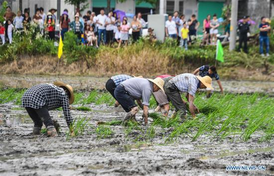 Farmers compete in transplanting rice seedlings at an entertainment sports meeting in Lianyang Village of Huzhou City, east China's Zhejiang Province, June 18, 2017. (Xinhua/Xu Yu)