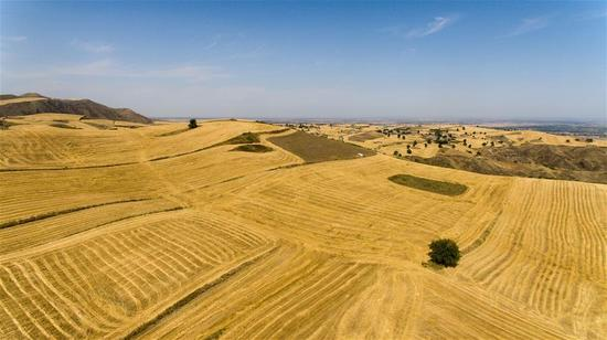 Photo taken on Sept. 10, 2017 shows the harvest scenery of wheat fields in Janbulak scenic spot in Qitai County of Changji, northwest China's Xinjiang Uygur Autonomous Region. The scenic spot attracted visitors with its golden autumn sceneries. (Xinhua/Wang Fei)