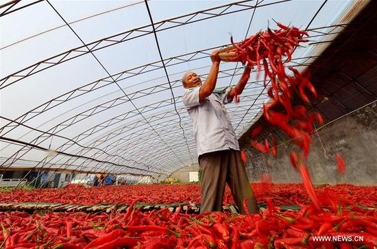 A villager airs chillies in Weiqing Village of Jize County in Handan, north China's Hebei Province, Sept. 11, 2017. (Xinhua/Wang Xiao)