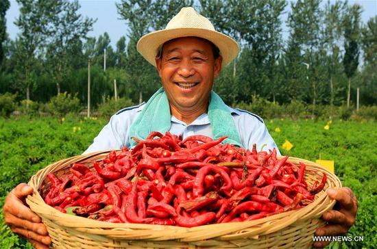 A villager shows chillies in Weiqing Village of Jize County in Handan, north China's Hebei Province, Sept. 11, 2017. (Xinhua/Wang Xiao)
