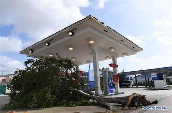A tree is seen after being toppled by strong wind after Hurricane Irma swept through the area, in Miami, Florida, the United States, on Sept. 11, 2017. Powerful Hurricane Irma roared into Florida and knocked out power to more than 3 million homes and businesses in Florida on Sunday. (Xinhua/Yin Bogu)