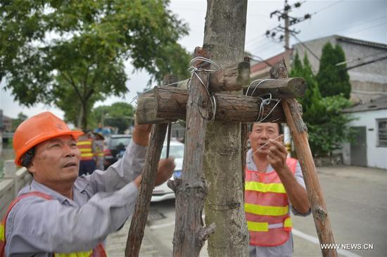 Workers reinforce trestles of trees in Luqiao District of Taizhou, east China's Zhejiang Province, Sept. 12, 2017. China's National Meteorological Center (NMC) Tuesday issued a blue alert for Typhoon Talim, which could intensify to a super typhoon and is likely to hit China's southeastern coast Thursday or Friday. (Xinhua/Chen Lincong)