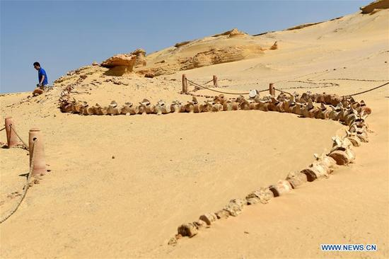 A tourist visits the natural reserve area of Wadi Al-Hitan, or the Valley of Whales, in Fayoum Governorate, Egypt, on Sept. 27, 2017. Wadi Al-Hitan, or the Valley of Whales, is a paleontological site in the Fayoum Governorate of Egypt. Wadi Al-Hitan contains invaluable fossil remains of the earliest, and now extinct, suborder of whales, Archaeoceti. It was designated a United Nations Educational, Scientific and Cultural Organization (UNESCO) World Heritage Site in 2005. (Xinhua/Zhao Dingzhe)