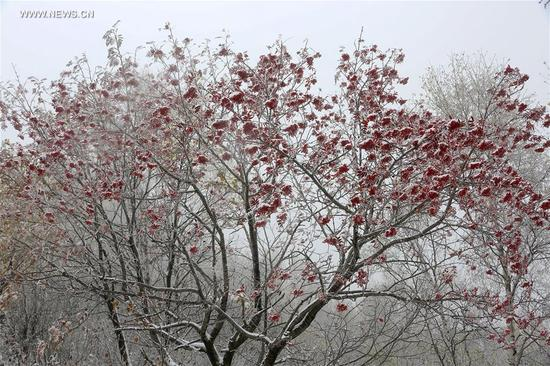 Photo taken on Oct. 10, 2017 shows the snowscape of Labagou Forest Scenic Resort in Huairou District of Beijing, capital of China, Oct. 10, 2017. The resort greeted snow on Tuesday. (Xinhua/Bu Xiangdong)