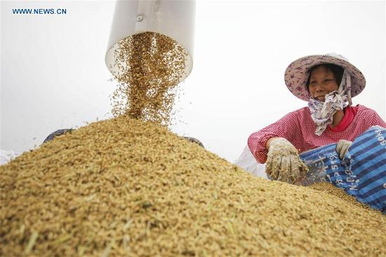 A farmer loads rice in Lianyungang, east China's Jiangsu Province, Oct. 10, 2017. (Xinhua/Si Wei)