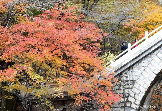 Tourists view the scenery of red leaves at Tianqiaogou forest park in Dandong, northeast China's Liaoning Province, Oct. 11, 2017. (Xinhua/Li Gang)