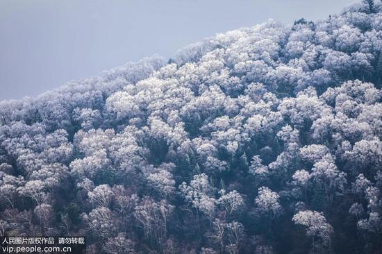 Photo taken on October 11, 2017 shows rime scenery on the Bamianwei Mountain in Huanren Countym, NE China's Liaoning Province.