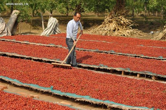 Villagers dry red dates in Junsongxi Village of Wenmiao Town in Botou, north China's Hebei Province, Oct. 12, 2017. More than 20,000 hectares of red dates had a great harvest in Botou.(Xinhua/Mu Yu)