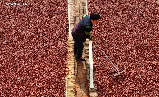 A villager dries red dates in Bianduli Village of Wenmiao Town in Botou, north China's Hebei Province, Oct. 12, 2017. More than 20,000 hectares of red dates had a great harvest in Botou.(Xinhua/Mu Yu)