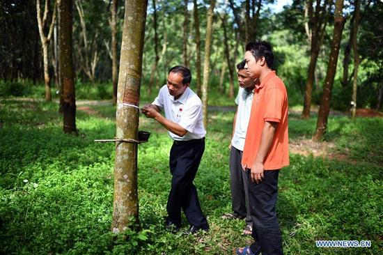 Yang Fengji (L), secretary of the Communist Party of China (CPC) branch of Tianbiao Village, shows rubber tapping skills to young villagers at Tianbiao Village of Baisha Li Autonomous County, south China's Hainan Province, Sept. 29, 2017. Yang has helped local villagers of Li ethnic group escape from poverty thanks to the rubber industry since 1998. Local villagers' per capita annual income reached 9,000 yuan (1,366 U.S. dollars) now, a giant leap from a mere 600 yuan 19 years ago. Yang has been elected as a delegate to attend the Party's 19th National Congress in Beijing from Oct. 18.