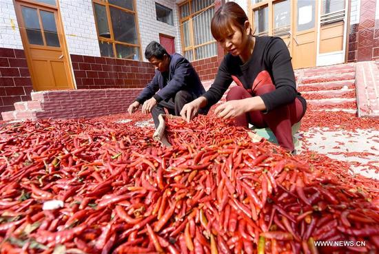 Farmers sort out peppers in Wanhuzhuang Village of Linxi County, north China's Hebei Province, Nov. 12, 2017. With plant area of more than 333 hectares, Linxi County saw a good harvest of chili pepper. (Xinhua/Zhu Xudong)