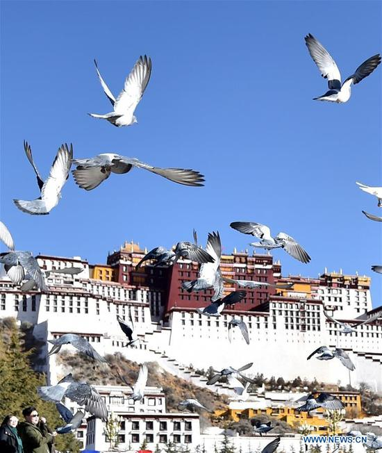 Pigeons fly over the Potala Palace square in Lhasa, capital city of southwest China's Tibet Autonomous Region, March 10, 2019. (Xinhua/Chogo)