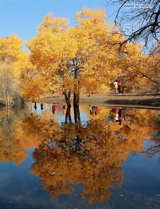 Tourists visit the populus euphratica forest in Jinta County of Jiuquan, northwest China's Gansu Province, Oct. 11, 2020 (Photo by Chen Li/Xinhua)