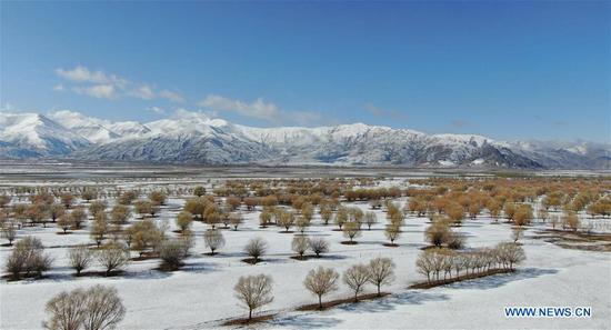 Aerial photo taken on March 24, 2020 shows the scenery along the Yarlung Zangbo River after a snowfall in southwest China's Tibet Autonomous Region. (Xinhua/Jigme Dorje)