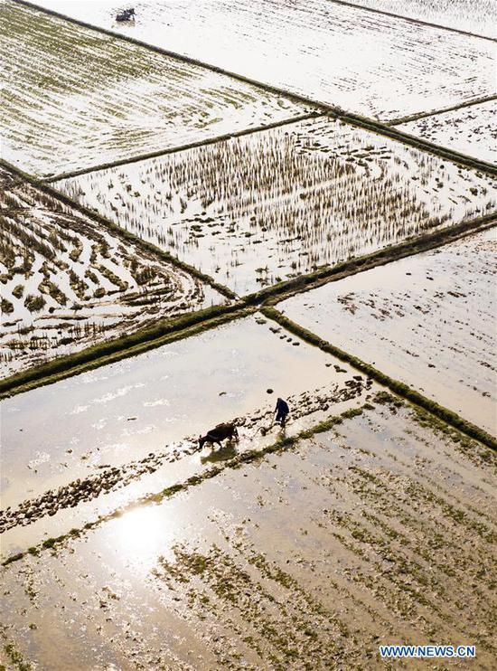 Aerial photo taken on March 11, 2019 shows a farmer working in fields at Nan'an Village of Yushui District in Xinyu City, east China's Jiangxi Province. With the temperature rising, farmers are busy with their farm work. (Xinhua/Zhao Chunliang)