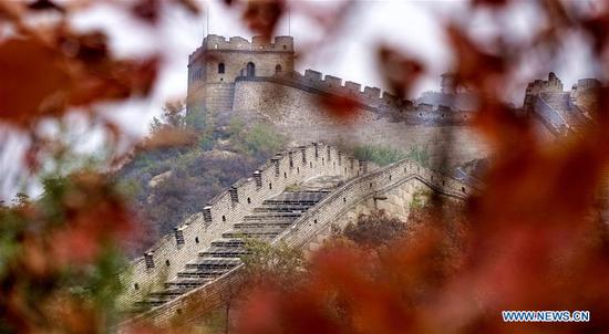 A section of the Badaling Great Wall is pictured through maple leaves in Yanqing District of Beijing, capital of China, Oct. 10, 2018. (Xinhua/Li Xin)