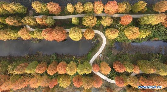 Aerial photo taken on Nov. 16, 2020 shows a view of the Qingshuitan wetland park in Gaoyou City of Yangzhou, east China's Jiangsu Province. (Photo by Meng Delong/Xinhua)