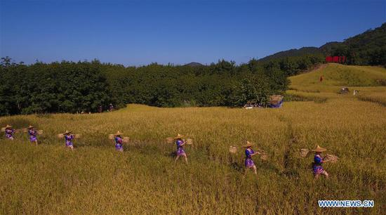 Aerial photo taken on Nov. 17, 2019 shows actors performing an outdoor musical in a paddy field in Yongchu Village, Qingsong Township, Baisha Li Autonomous County, south China's Hainan Province, Nov. 17, 2019. The annual Shanlan cultural festival of Baisha kicked off here on Sunday, on which the locals celebrated the bumper harvest of local Shanlan rice and prayed for a favorable weather for farming next year together. (Xinhua/Yang Guanyu)