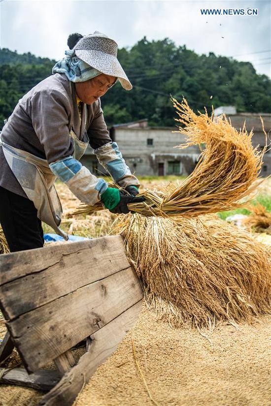 A farmer threshes rice stalks in Muze Village of Zhongzhai Miao-Yi-Buyi Town of Liuzhi special region, Liupanshui City, southwest China's Guizhou Province, Sept. 21, 2020. A total of 120,000 mu (8,000 hectares) rice ushered in harvest season recently in Liuzhi. (Xinhua/Tao Liang)