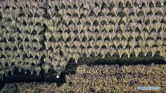Aerial photo taken by drone shows a field at the ancient Tangyue Village of Shexian County, east China's Anhui Province, May 10, 2018. (Xinhua/Zhang Duan)