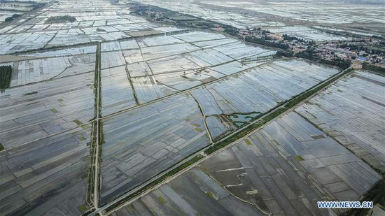 Aerial photo taken on May 21, 2018 shows the road next to fields in Qapqal Xibe Autonomous County, northwest China's Xinjiang Uygur Autonomous Region. As an important link of the Silk Road Economic Belt, Xinjiang is speeding up the development of transportation and logistics to connect east and west. By the end of 2017, the total length of roads in Xinjiang reached 186,000 km, with 4,578 km of expressways. (Xinhua/Hu Huhu)
