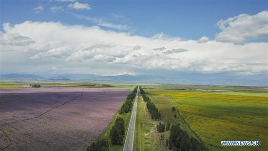 Aerial photo taken on Aug. 2, 2018 shows a road in Zhaosu County, northwest China's Xinjiang Uygur Autonomous Region. As an important link of the Silk Road Economic Belt, Xinjiang is speeding up the development of transportation and logistics to connect east and west. By the end of 2017, the total length of roads in Xinjiang reached 186,000 km, with 4,578 km of expressways. (Xinhua/Hu Huhu)