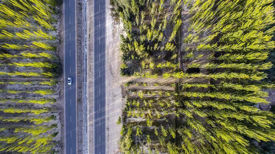 Aerial photo taken on Sept. 20, 2018 shows a car running in an area of Kekeya's greening project in Aksu, northwest China's Xinjiang Uygur Autonomous Region. (Xinhua/Hu Huhu)