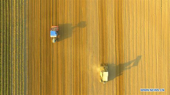 Aerial photo taken on March 14, 2019 shows farmers working with farm machineries in fields at Fengzhuang Village of Jiazhai Township in Liaocheng City, east China's Shandong Province. (Xinhua/Zhao Yuguo)
