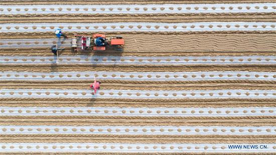Aerial photo taken on April 19, 2019 shows farmers sowing in a corn field in Changjia Township of Gaoqing County, east China's Shandong Province. (Xinhua/Zhang Weitang)