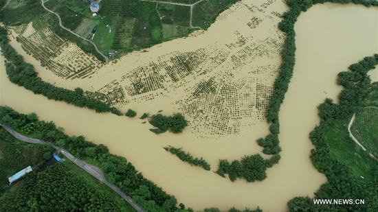 Aerial photo taken on July 9, 2019 shows the flooded areas in Dajiang Town, Rong'an County, south China's Guangxi Zhuang Autonomous Region. Torrential rain in south China's Guangxi Zhuang Autonomous Region has affected the lives of over 280,000 people since Saturday, the local emergency management department said Tuesday. Floods and waterlogging have hit 40 counties and districts under the cities of Nanning, Liuzhou, Guilin, Guigang, Baise, Hechi, Laibin and Chongzuo. (Photo by Tan Kaixing/Xinhua)