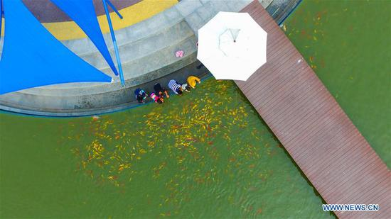 Aerial photo shows tourists viewing fish at Caofeidian Wetland Park in Tangshan, north China's Hebei Province, June 26, 2020. China saw around 48.81 million domestic tourist trips made during the Dragon Boat Festival holiday, bringing in 12.28 billion yuan (around 1.74 billion U.S. dollars), the Ministry of Culture and Tourism said Saturday. (Photo by Zhao Haitao/Xinhua)