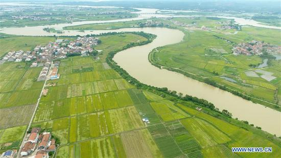 Aerial photo taken on July 11, 2020 shows a river across the farmland with high water level at Gangkou Township in Yueyang County, central China's Hunan Province. The early rice in parts of Yueyang County was beaten down by strong wind and heavy rainfall. The local government organized farmers to rush to harvest early rice to minimize the loss due to the continuous severe convective weather recently. (Xinhua/Chen Zeguo)