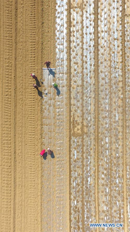 Aerial photo taken on March 11, 2019 shows villagers working in fields at Xinghuliu Village of Jiazhai Township in Chiping County, Liaocheng City, east China's Shandong Province. With the temperature rising, farmers are busy with their farm work. (Xinhua/Zhao Yuguo)