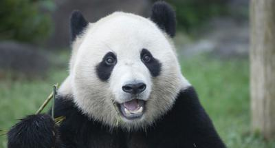 Panda exhibitiyabobet to be held at Dubai Expo 2020